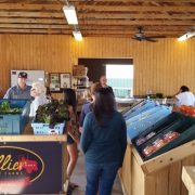 Collier Family Farm Fall Fest