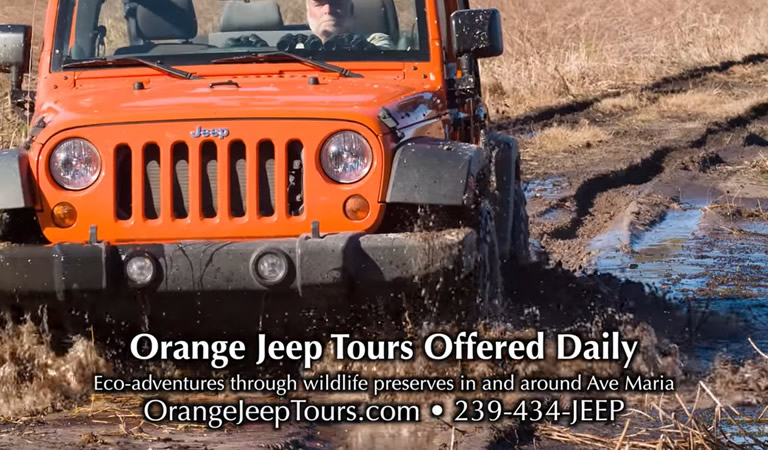 Safari Adventures with Orange Jeep Tours
