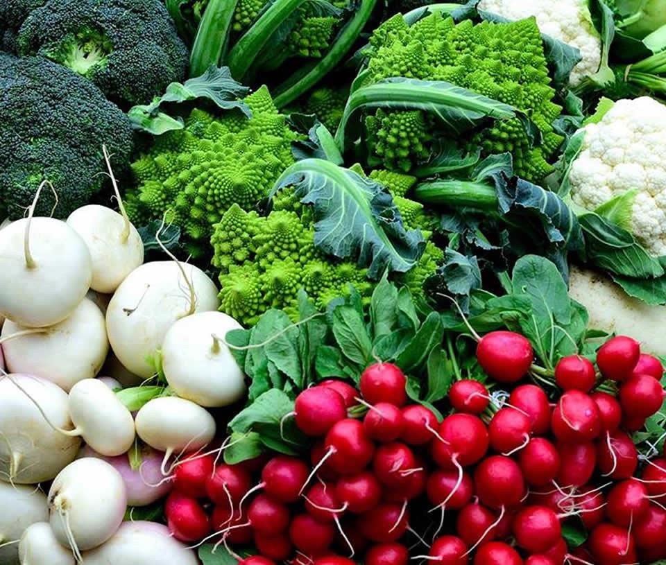 Ave Maria Farmer's Market